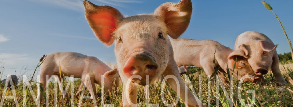 Animal Cloning - American Anti-Vivisection Society
