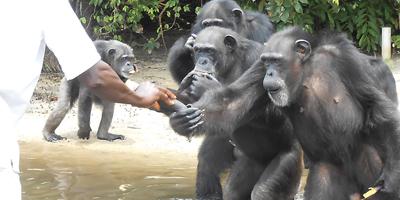 action-thumb_nybc-liberia