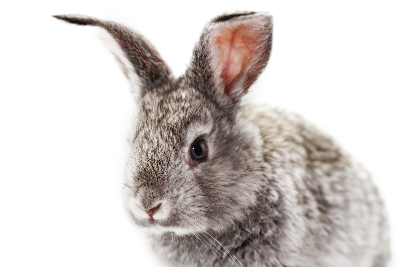 Wanted: Cruelty-Free and Safe Products