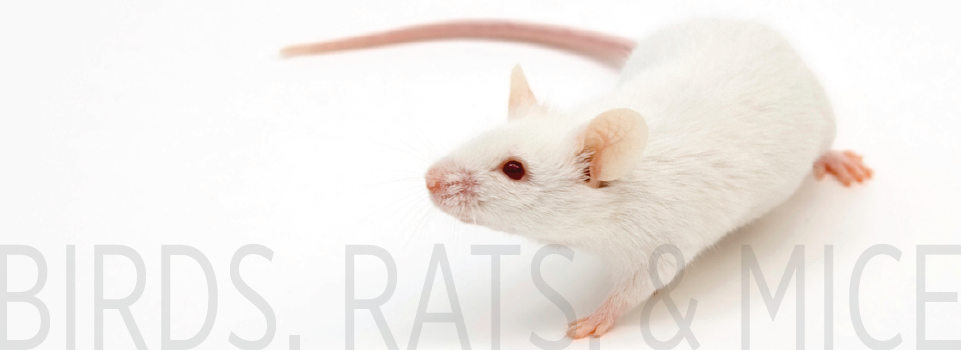 Birds, Rats, and Mice