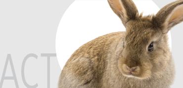 sidebar_humane-cosmetics_act