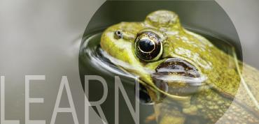 sidebar_humane-education_learn
