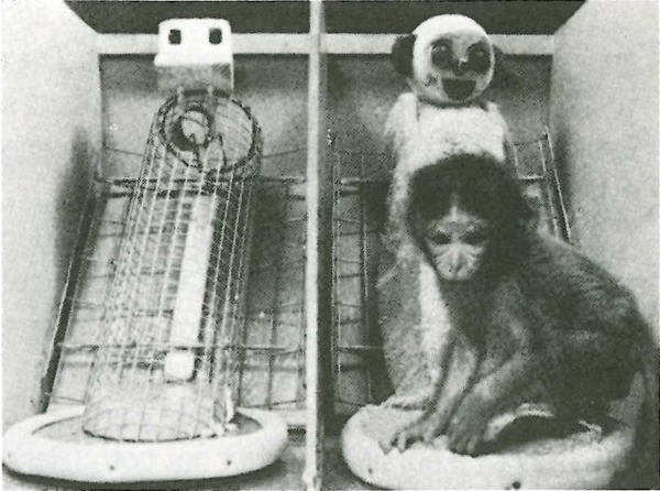 harry harlow monkey experiment Harry harlow passed away in 1981, at the age of 75 and is still known today for his amazing experiments, findings, and studies psychological perspective: harry harlow was an american psychologist who came up with a new understanding of human behavior and human development studying the social behavior of monkeys.