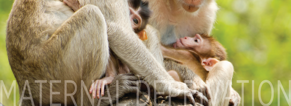 maternal deprevation 1 maternal deprivation: experiments in psychology a critique of animal models by martin l stephens, phd a report prepared for: the american anti-vivisection society.