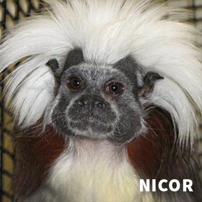 Nicor