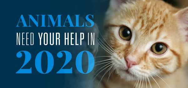 Animals Need Us in 2020