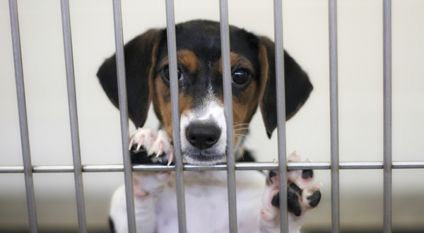 Transparency Needed to Protect Animals