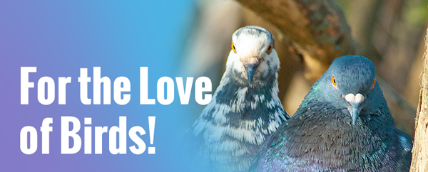 For the Love of Birds!