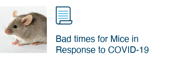 Bad times for Mice in Response to COVID-19