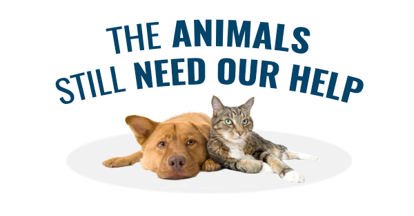 Animals Need Our Help