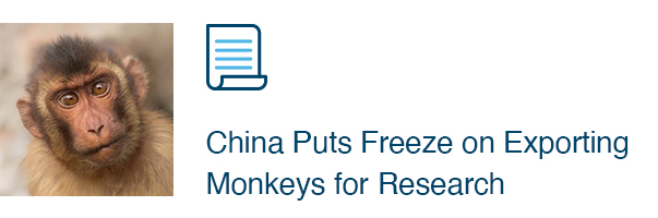 China Puts Freeze on Exporting Monkeys for Research