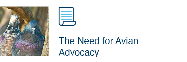The Need for Avian Advocacy