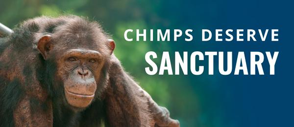 Chimps Deserve Sanctuary