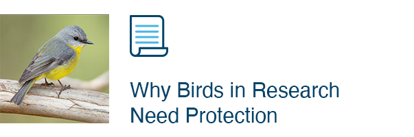 Why Birds in Research Need Protection