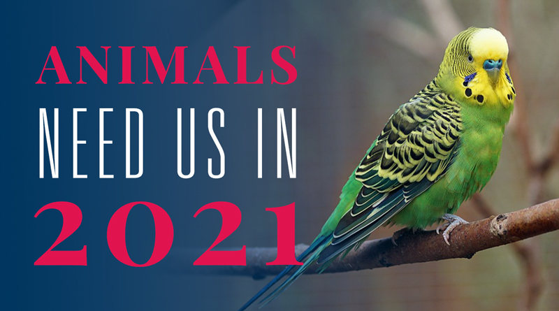 Animals Need Us in 2021