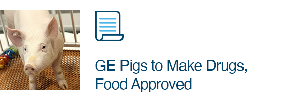 GE Pigs to Make Drugs, Food Approved
