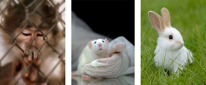 World Day for Animals in Labs